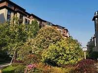出售悦山湖河景洋房,120平方标准4室2厅带车位及储藏室可以看到整个靠近奥体