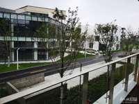 西南科技城,华悦广场,全新现房,40--300平都有,红星美凯龙对面