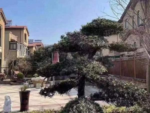 碧桂园 滨湖城一期 双拼排屋 215平 北进门 花园120平 精装修